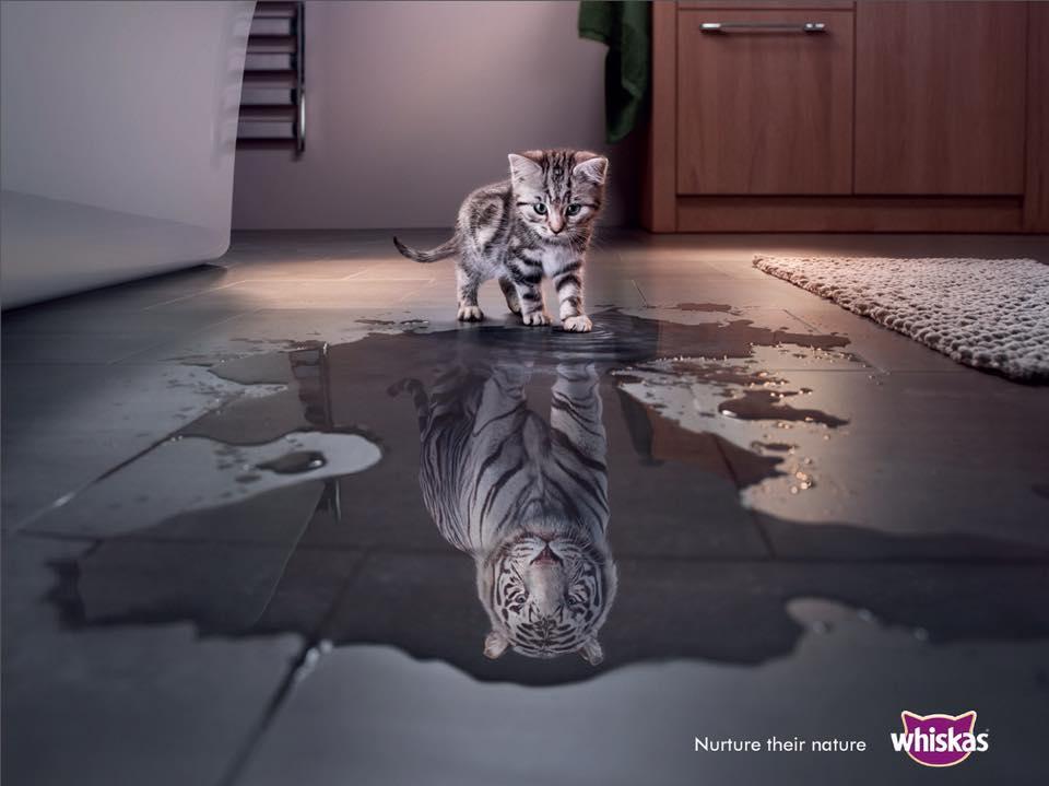 Laisse rugir le tigre qui est en toi !